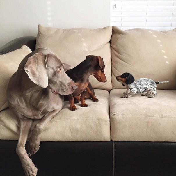 harlow-sage-indiana-reese-cute-dog-photos-12-605x605